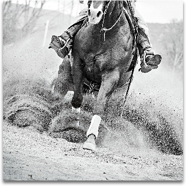 Reining In preview