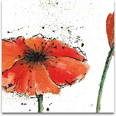Not A California Poppy III On White - 12x12 preview