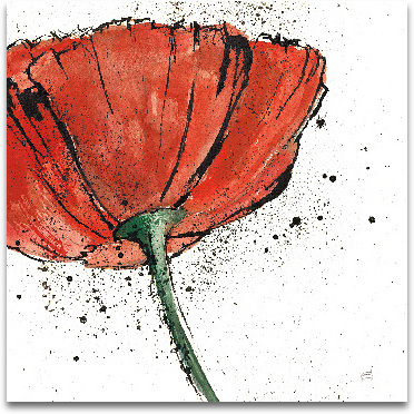 Not A California Poppy On White I preview