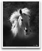 Horse Portrait V