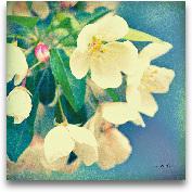 Nature's Apple Blossom