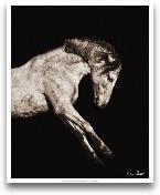 Horse Portrait IV
