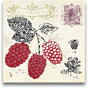 Raspberry Notes - 12x12