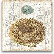 Botanical Nest III -...<span>Botanical Nest III - 12x12</span>