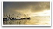 Marina Morning II