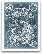 Sealife Blueprint I