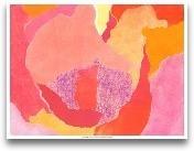 Cabbage Rose IV