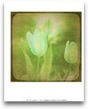 White Flowers VIII