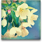 Natures Apple Blosso...<span>Natures Apple Blossom - 12x12</span>