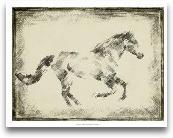Equine Study I