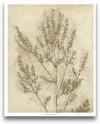 Gilded Foliage II