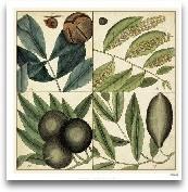 Catesby Leaf Quadrant IV