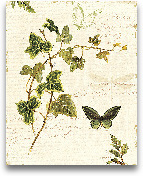 Ivies And Ferns IV -...<span>Ivies And Ferns IV - 8x10</span>