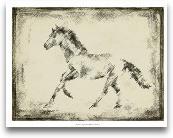 Equine Study II