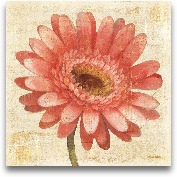 Blushing Gerbera On ...<span>Blushing Gerbera On Cream</span>