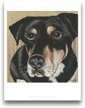 Dlynn's Dogs - Ginger
