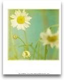 White Flowers IV