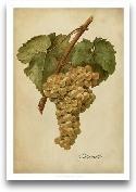 Vintage Vines III
