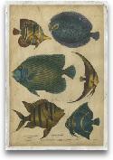 Goldsmith's Spinous ...<span>Goldsmith's Spinous Fishes</span>