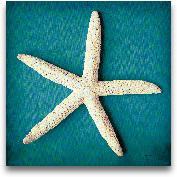Sea Star II