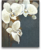 Orchid Whites