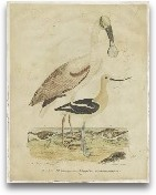 Embellished Spoonbil...<span>Embellished Spoonbill &amp; Sandpipers</span>