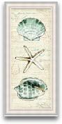 8x20 Coastal Shells