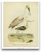 Antique Spoonbill &a...<span>Antique Spoonbill &amp; Sandpipers</span>