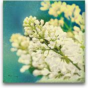 Nature's Lilac Blossom