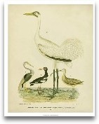 Antique Crane &amp; ...<span>Antique Crane &amp; Heron</span>