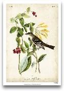 Audubon Bird &amp; B...<span>Audubon Bird &amp; Botanical II</span>