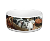 Small Pet Bowl