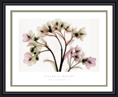 HELLEBORE 2 preview