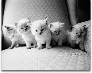 Five Kittens preview