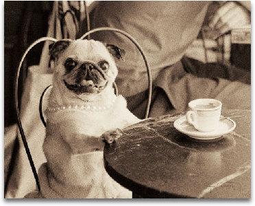 Cafe Pug preview