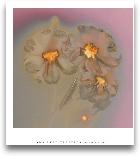 GHOST FLOWERS II