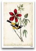 Audubon Bird & B...<span>Audubon Bird & Botanical I</span>
