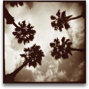 Tropical Quartet