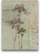 Silver Foliage II