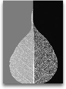 Crystalline Form II