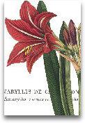 Botanique I