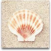 Seashell Voices