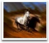 Blazing Horse III