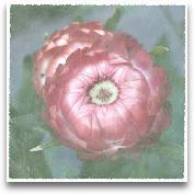 Lyon Flower I