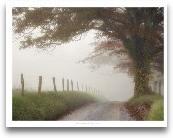 Blanket Of Fog