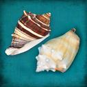 Two Shells III - 10x10