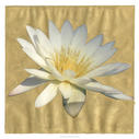 Gilded Lily I